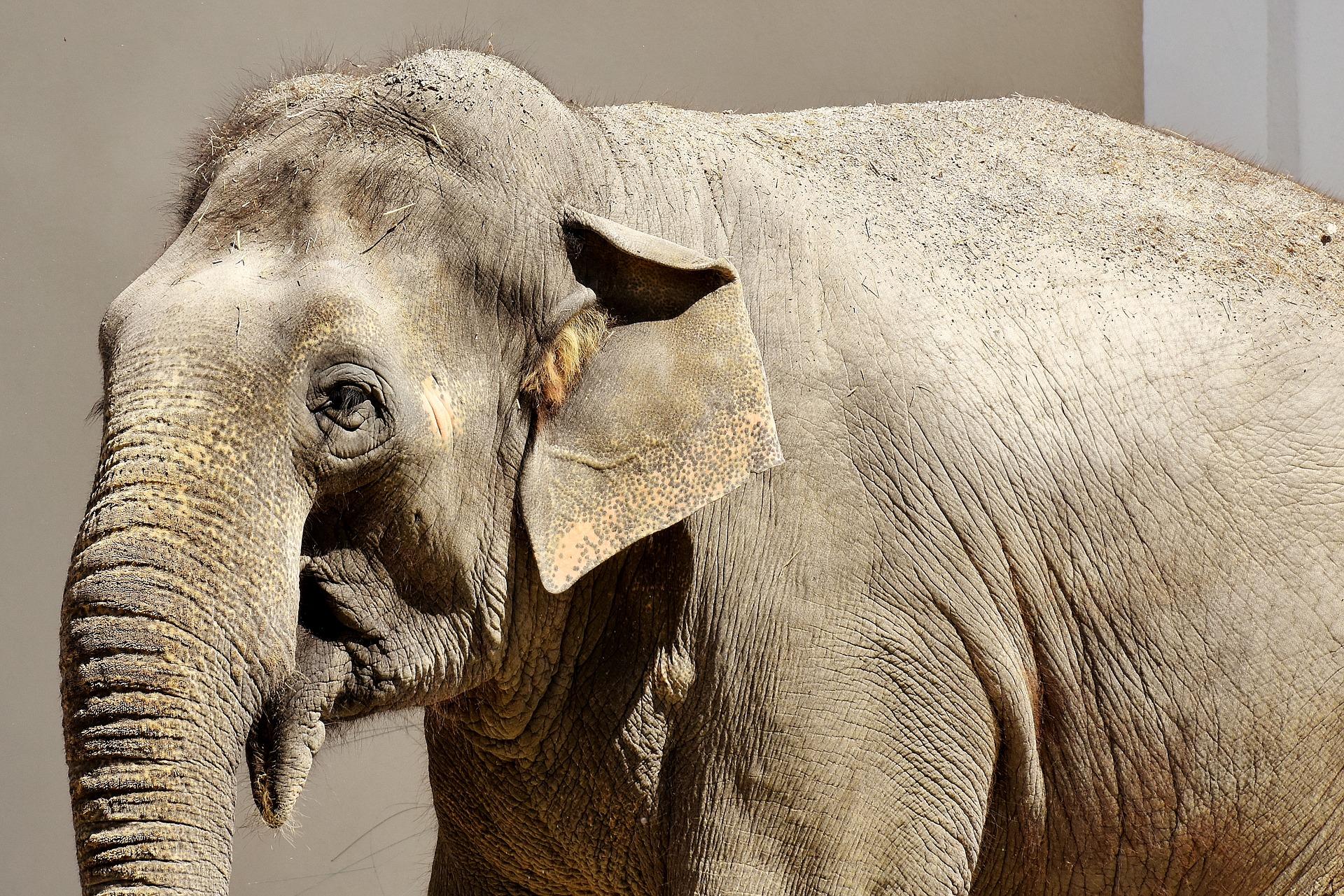 «Elephant Haven» sanctuaire pour éléphants.