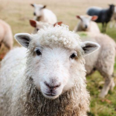 Colloque «Le Bien-être animal,un enjeu de justice et de paix» à Strasbourg