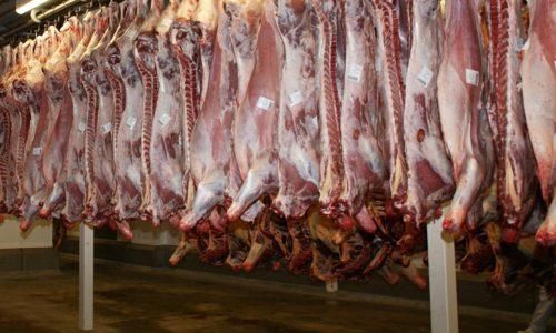 La SNDA et le député Falorni demandent au Président Macron de tenir ses engagements en matière de protection animale