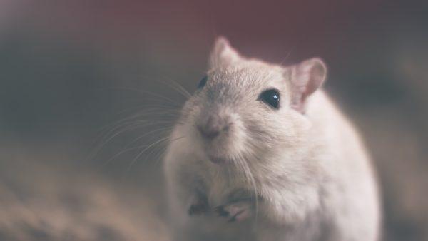Utilisation des animaux à des fins scientifiques en France