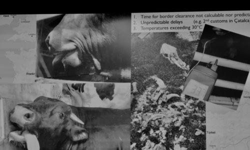 Mettre fin à la souffrance animale sur les routes européennes et au-delà…