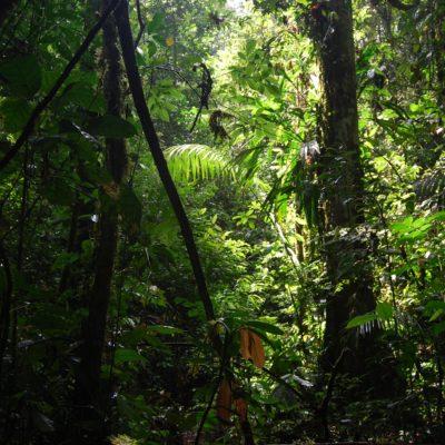 """Mission de sauvetage """"Yakusinchi"""" en Equateur avec MakiGo"""
