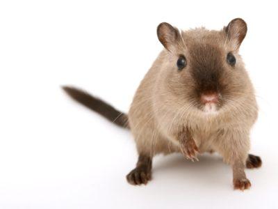 Présentation parlementaire – Fin de l'expérimentation animale ?  Obstacles et perspectives