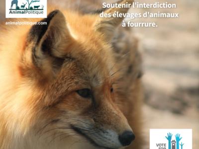Notre campagne quotidienne pour les élections européennes en partenariat avec le collectif AnimalPolitique
