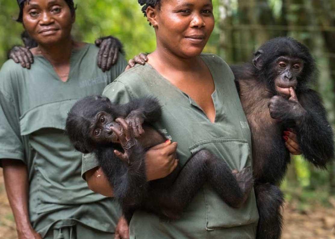 Des nouvelles du centre de réhabilitation des Bonobos en RDC