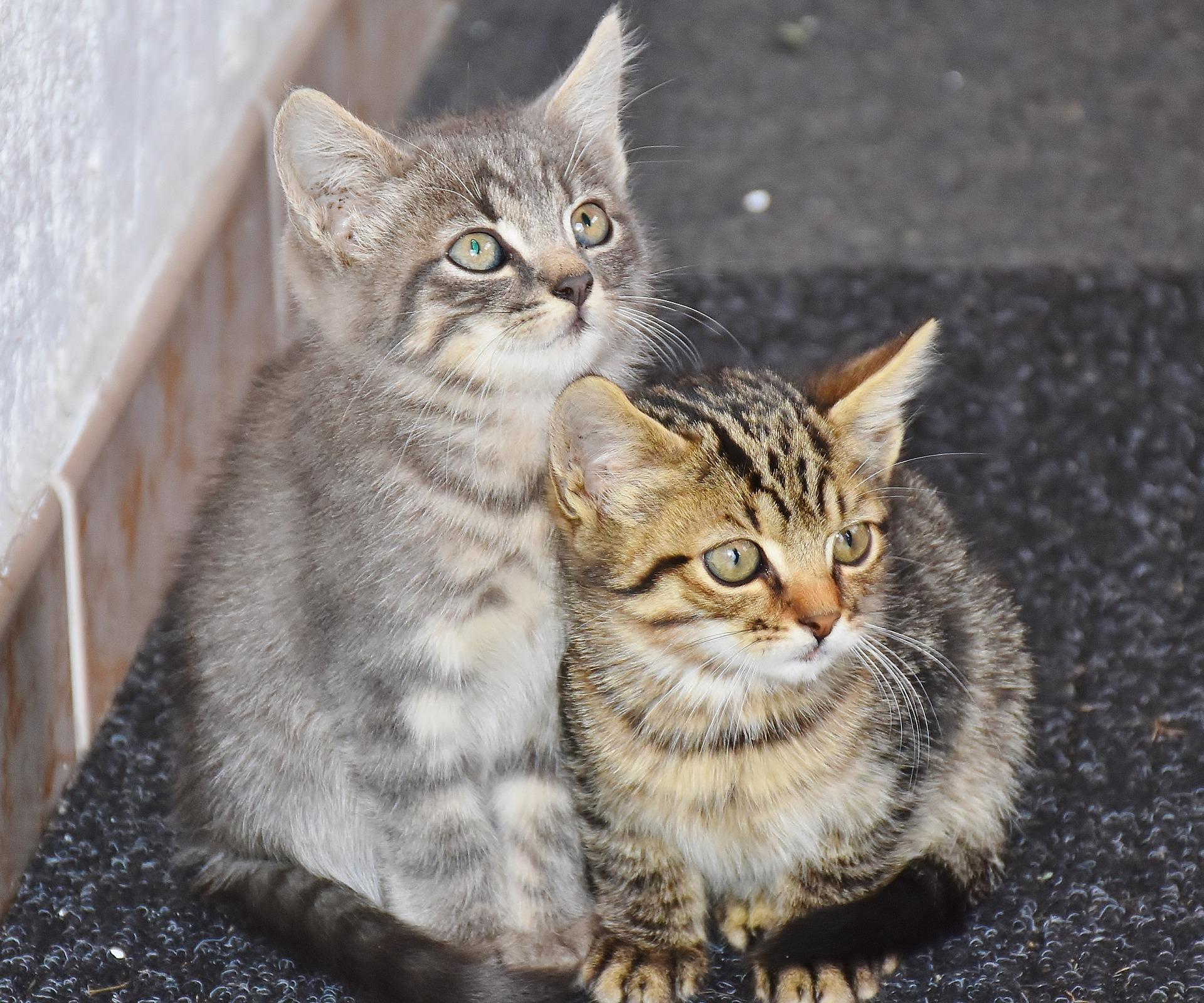 Interdiction à vie de détenir un animal à Reims : la SNDA était partie civile.