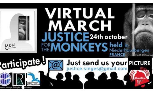 Soutien à la marche virtuelle pour les singes en laboratoire
