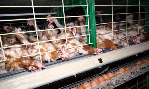La proposition de loi sur les conditions de vie des animaux n'a pas été votée