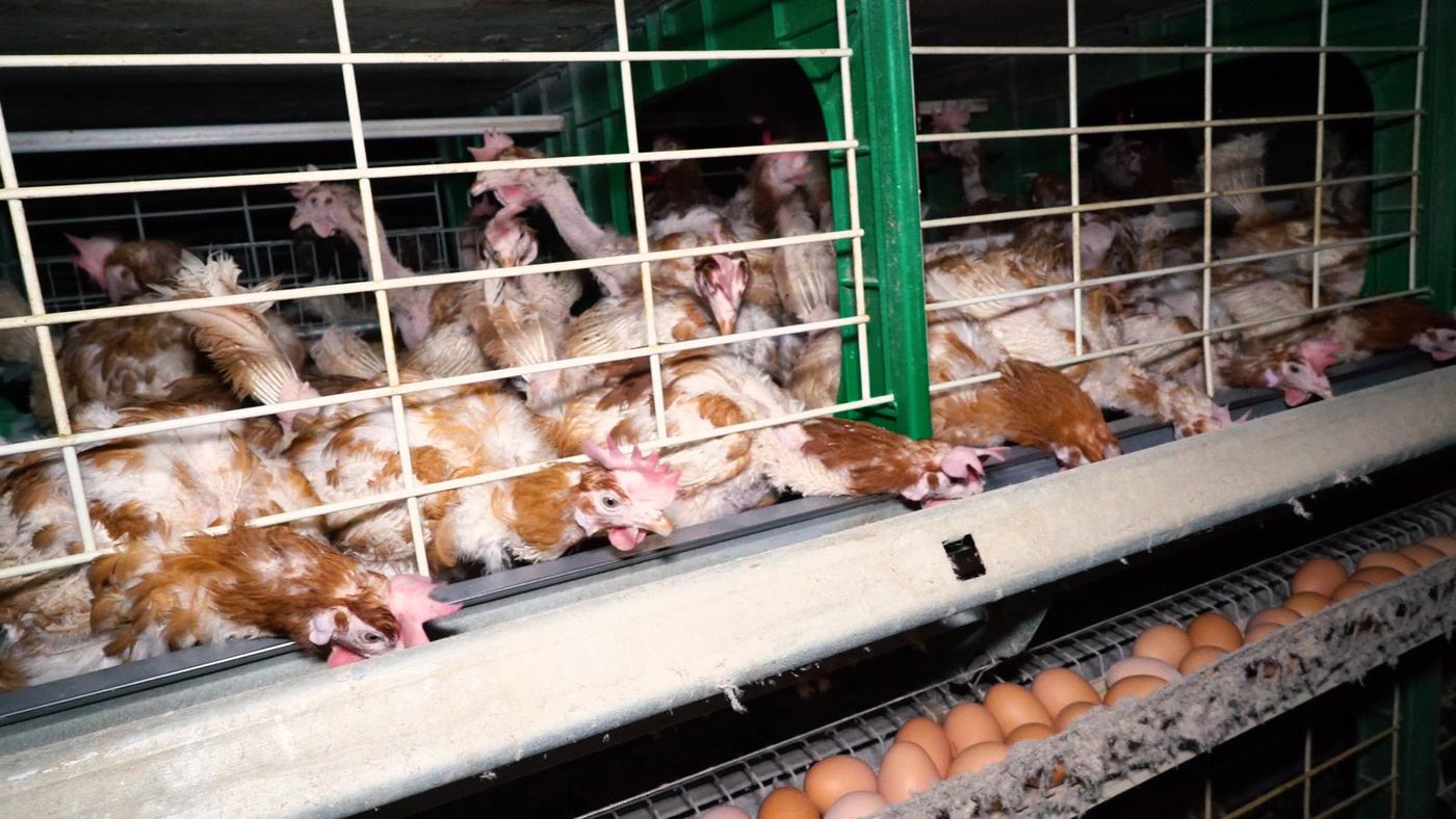 You are currently viewing La proposition de loi sur les conditions de vie des animaux n'a pas été votée