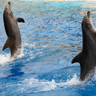 La France programme la fin des animaux sauvages dans les cirques et delphinariums.