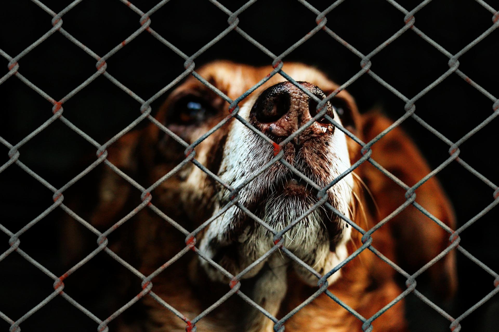 Une nouvelle proposition de loi contre la maltraitance animale