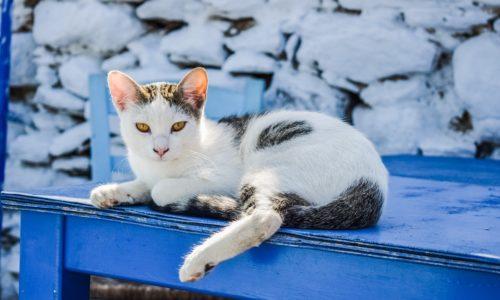 En Grèce, la maltraitance animale est désormais un crime