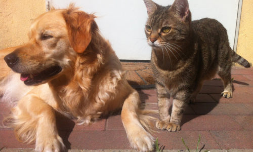 Maltraitance animale : la loi adoptée en première lecture.