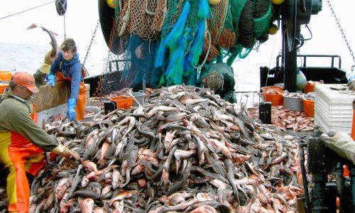 Journée mondiale pour la fin de la pêche