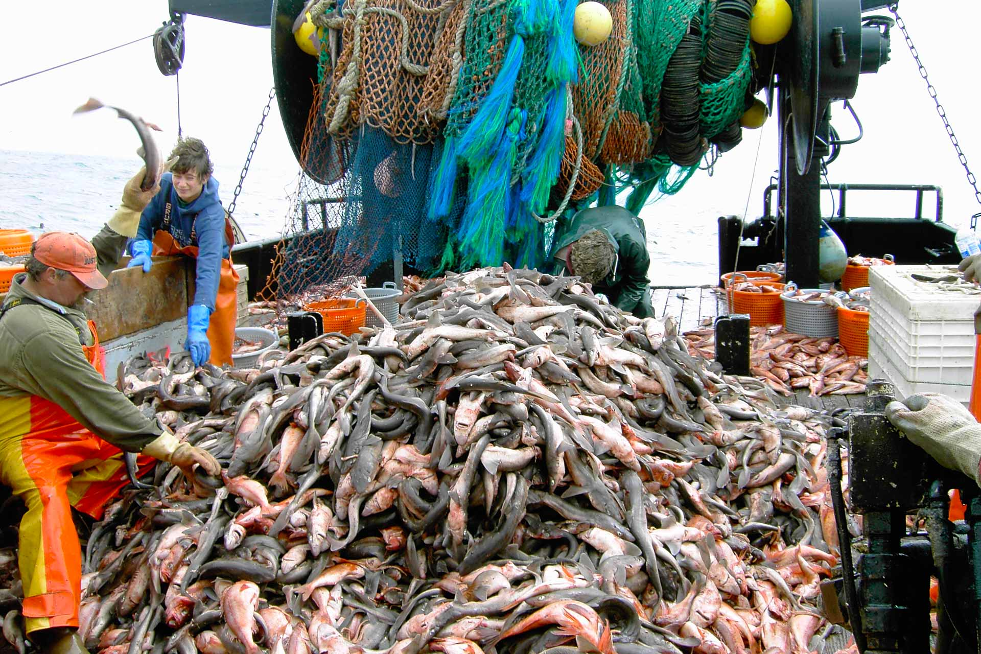 You are currently viewing Journée mondiale pour la fin de la pêche