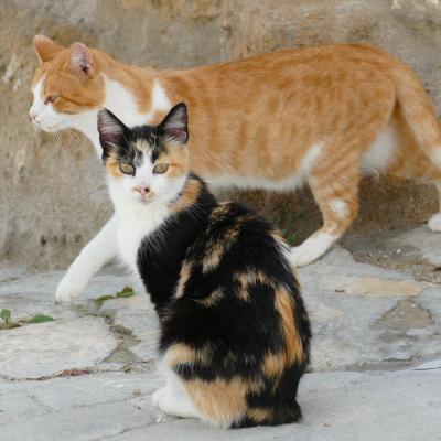 Les campagnes de stérilisation des chats errants de plus en plus médiatisées.