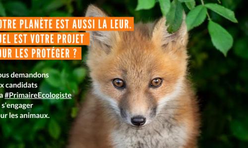 Primaire Ecologiste : quels engagements pour les animaux ?