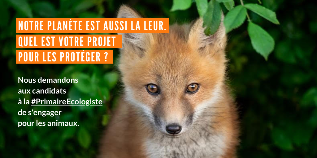 You are currently viewing Primaire Ecologiste : quels engagements pour les animaux ?